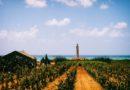 Vino: a Gibellina lo Scirocco Wine Fest con 6 paesi mediterranei, oggi la presentazione a Palermo