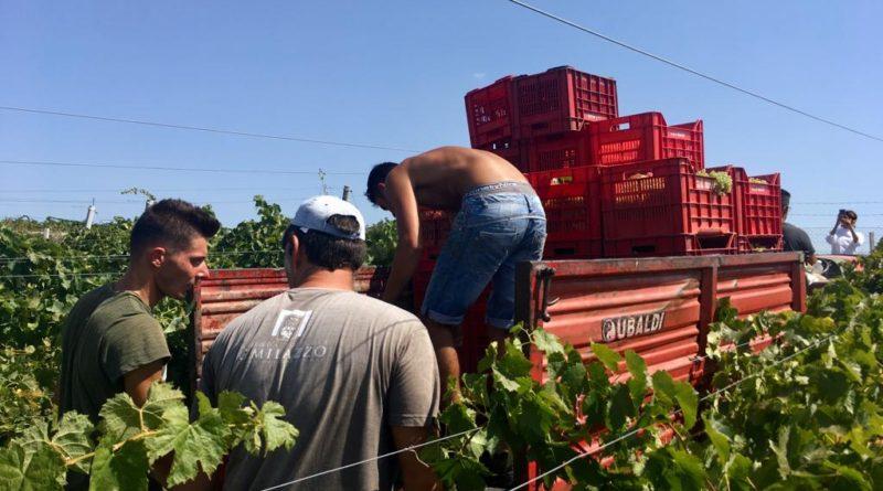 Coldiretti: caldo favorisce vendemmia, provvidenziale per il vino Made in Italy