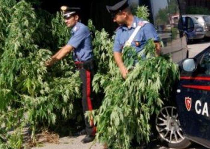 Ragusa, 5 chili di marijuana, armi e munizioni in azienda agricola: due arresti