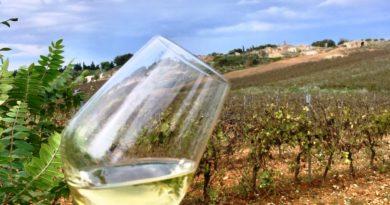 """OCM Vino Sicilia: """"Pronto bando campagna 2021-22, circa 6 milioni per promuovere vini nei paesi terzi"""""""